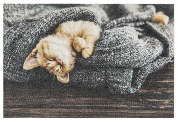 Schmutzfangmatte Deco Print Katze mit Decke